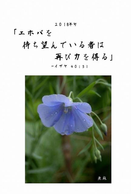 年句亜麻.jpg